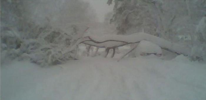 Дерево упало на автомобиль (4 фото)