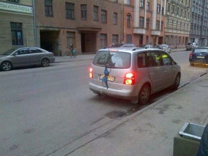Загонные фотографии из Латвии (47 фото)