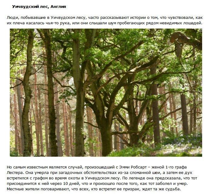 Таинственные леса (10 фото)