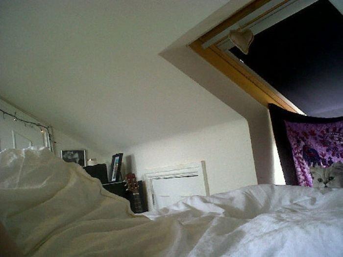 Кот, который любит прятаться (13 фото)
