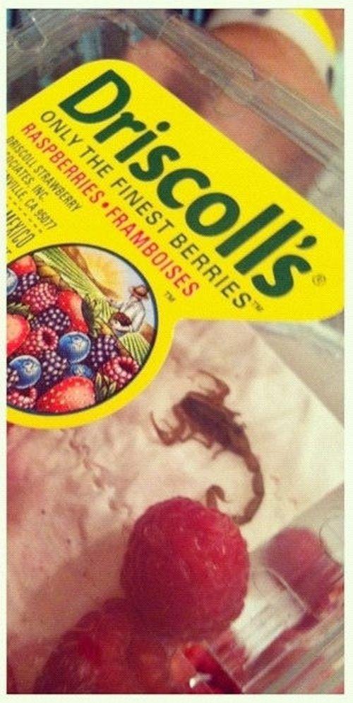 Сюрприз в коробке с ягодами (2 фото)
