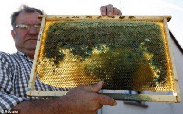 Неправильный мед (3 фото)