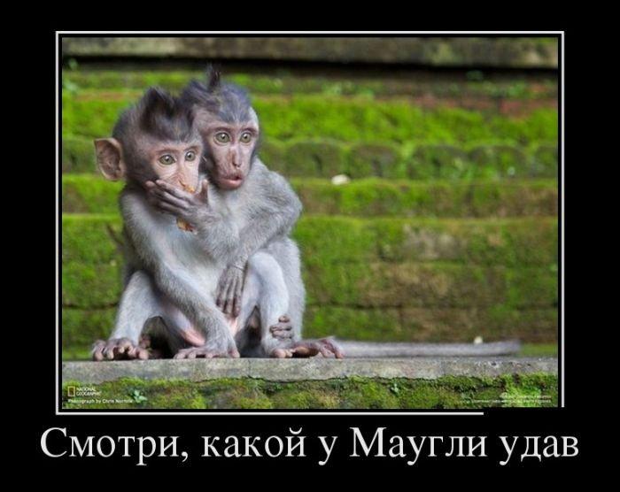 Демотиваторы на среду (29 фото)