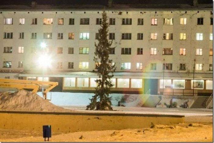 Главная ель города Гаджиево (2 фото)