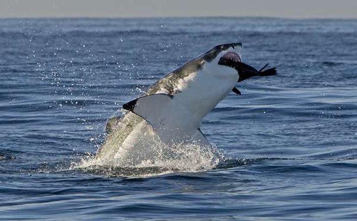 только охота на акул фото эти