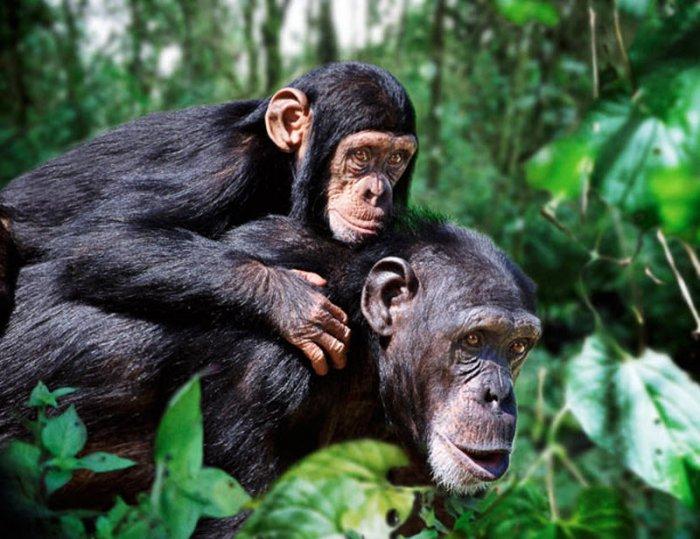 Семьи животных (15 фото)