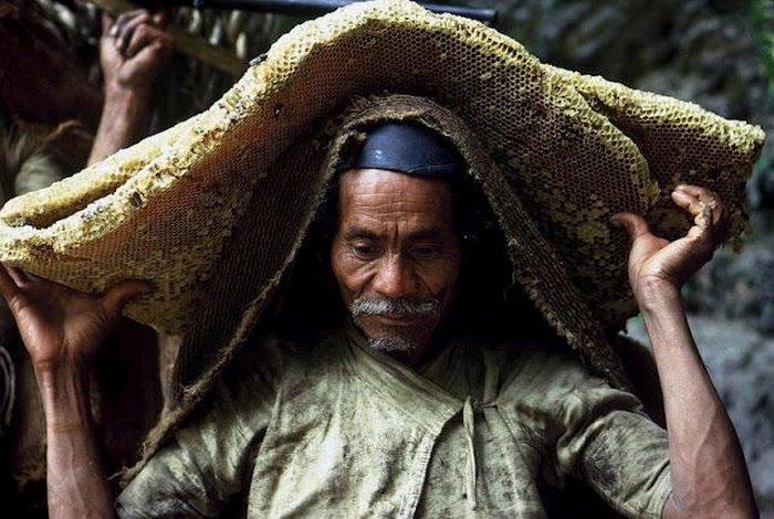 Собиратель дикого меда в Непале (13 фото)