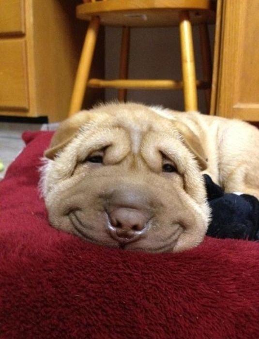 Забавные собаки (110 фото)