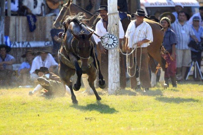 Укрощение лошадей (18 фото)