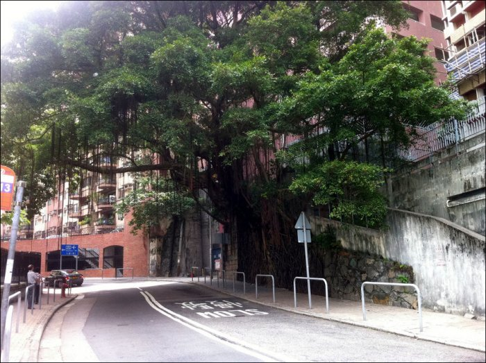 Деревья на стенах (4 фото)