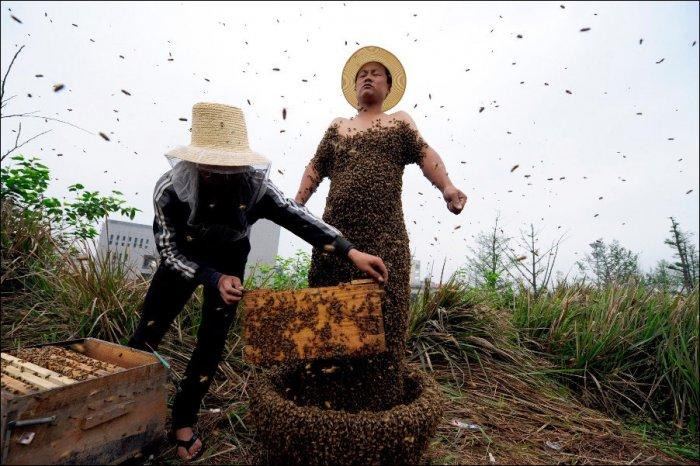 330 тысяч пчел на теле (3 фото)