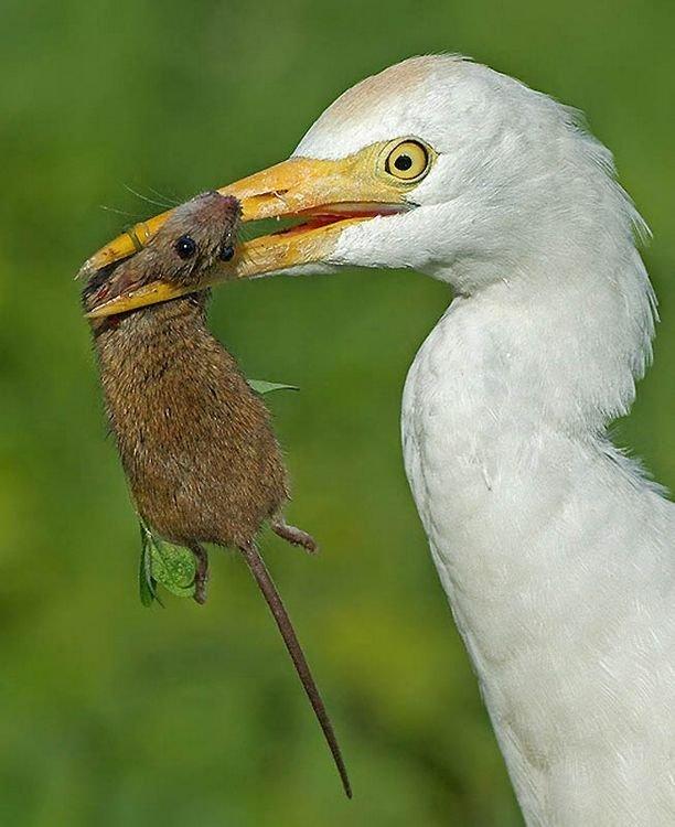 Птицы с добычей (16 фото)
