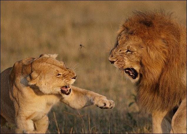 Семейная ссора (5 фото)