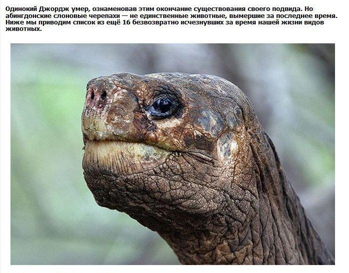 Исчезнувшие виды (9 фото)