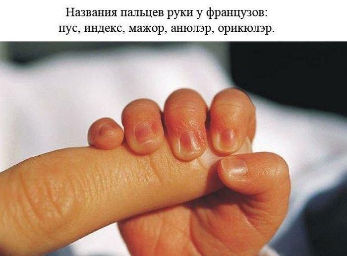 Факты о человеке (24 фото)