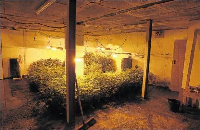Подземный сад (3 фото)