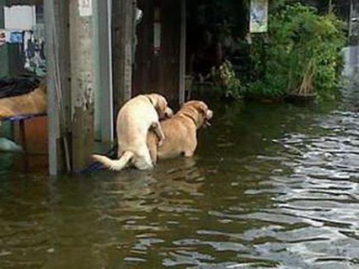 Забавные фотографии во время наводнений (67 фото)