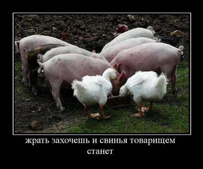 Демотиваторы на четверг (30 фото)