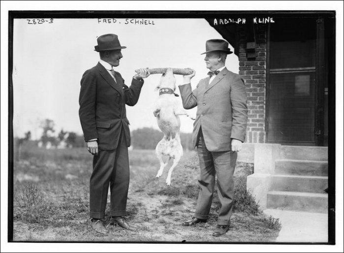Фотографии животных начала 20 века (21 фото)