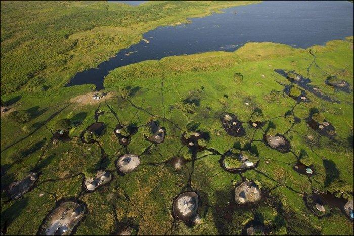 Жизнь на болоте (9 фото)