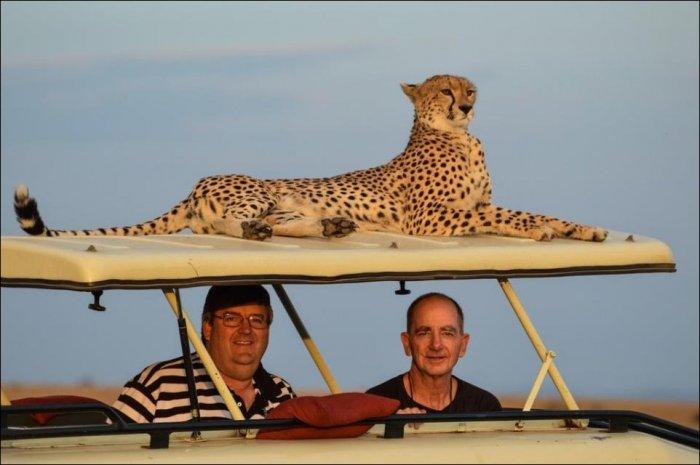 Где-то в Африке (3 фото)
