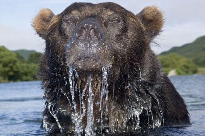 Снимок медведя (4 фото)