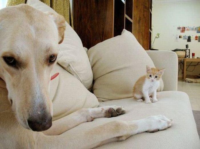 Фотобомбы с животными (84 фото)