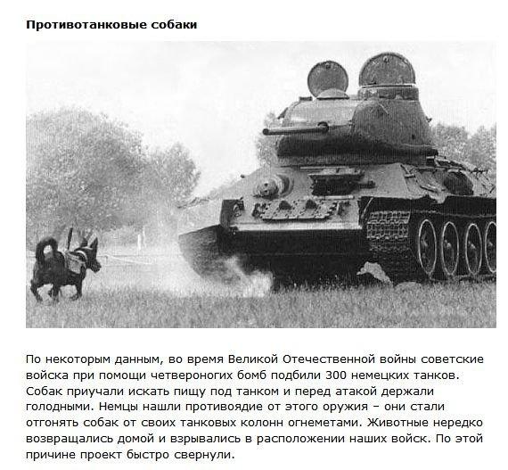 Необычные военные разработки (9 фото)