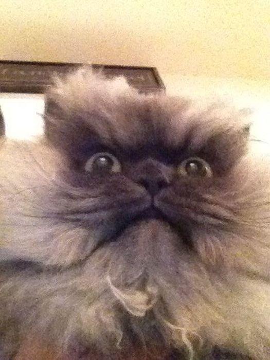 Суровый кот (28 фото)