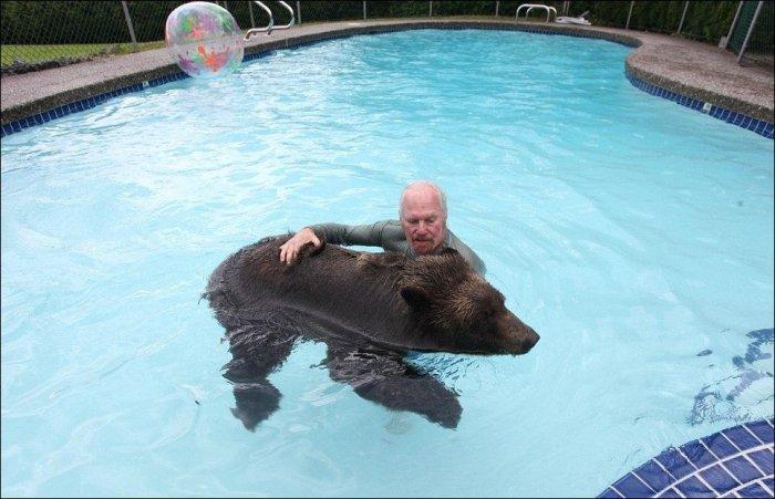 Домашний медведь (9 фото)