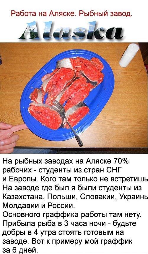 Как русский парень работал в США (25 фото)