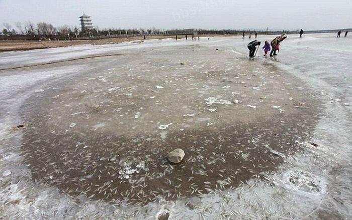 Зимняя рыбалка по-китайски (9 фото)