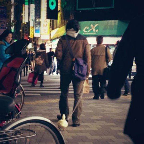Приколы из Азии (31 фото)