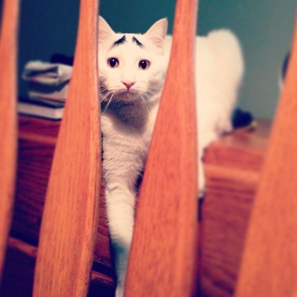 Необычный котик (30 фото)