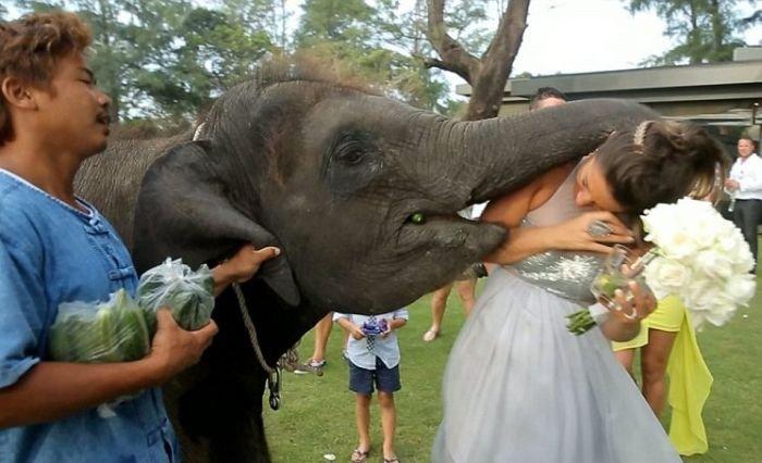 смешные смешные картинки как целуются слоны ствол