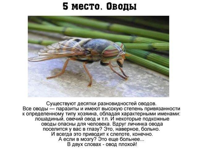 Самые опасные насекомые России (7 фото)