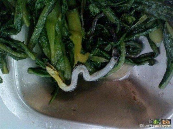 Сюрприз в салате (4 фото)