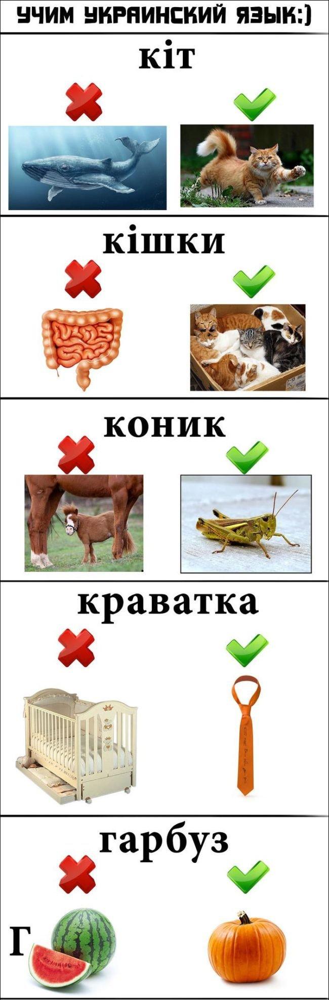 Про слова и языки (4 фото)