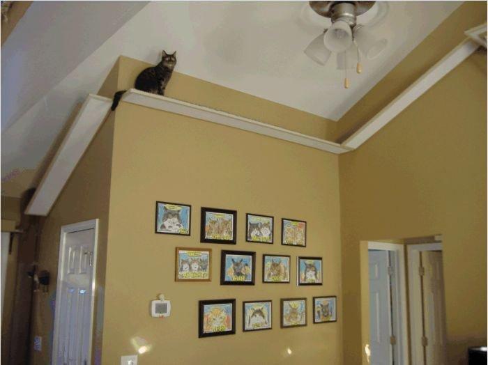 Игровая площадка для котов своими руками (9 фото)