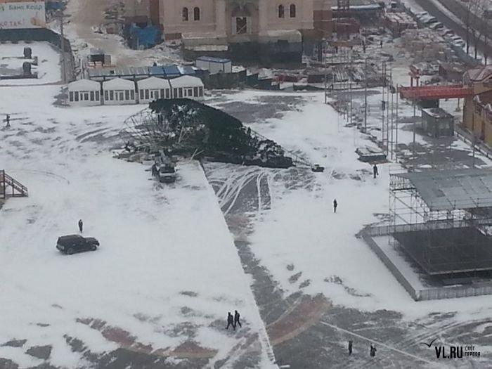 Во Владивостоке упала новогодняя ель (18 фото)