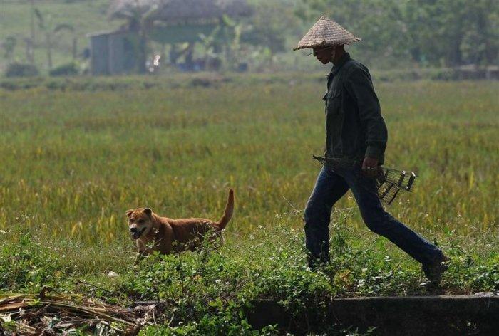 Неприятный вьетнамский деликатес (25 фото)