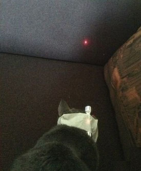 Как свести кота с ума (2 фото)