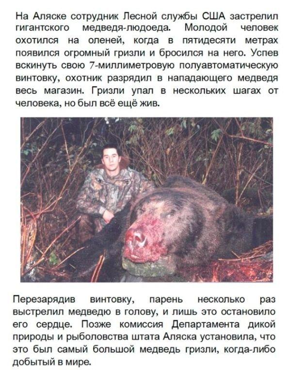 Самый большой медведь в мире (2 фото)