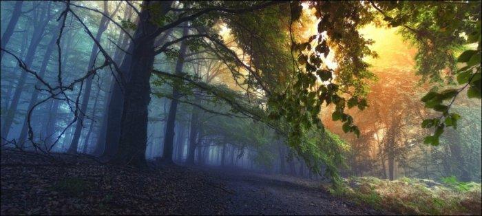 Сказочный лес (21 фото)