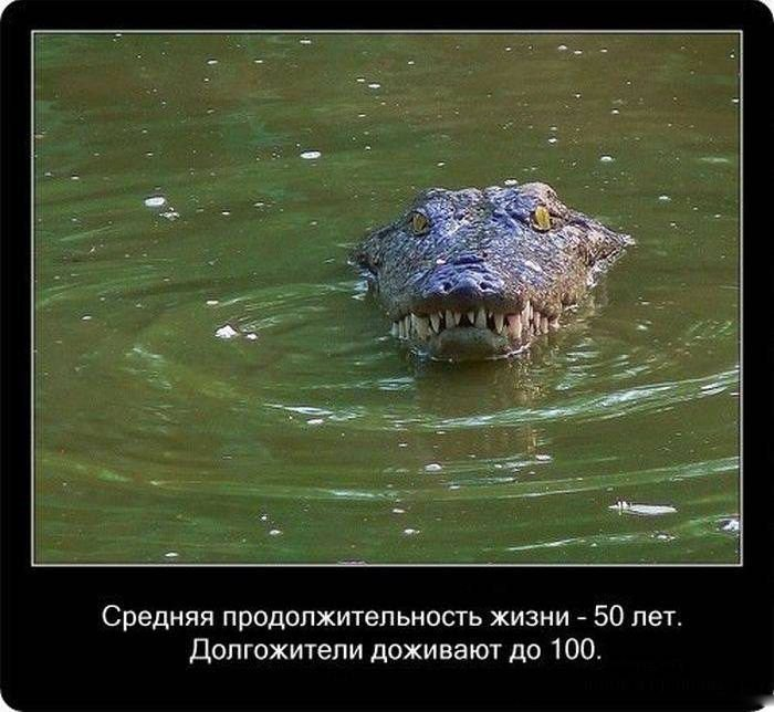 Про крокодилов (22 фото)