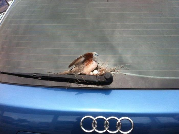 Автомобильные приколы. Часть 4 (40 фото)