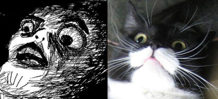 Коты и персонажи комиксов (18 фото)