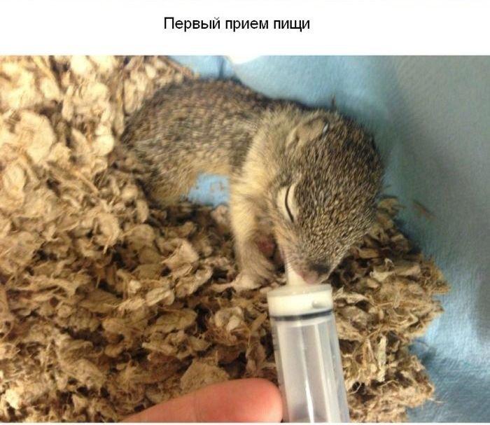 Спасение маленького бельчонка (17 фото)