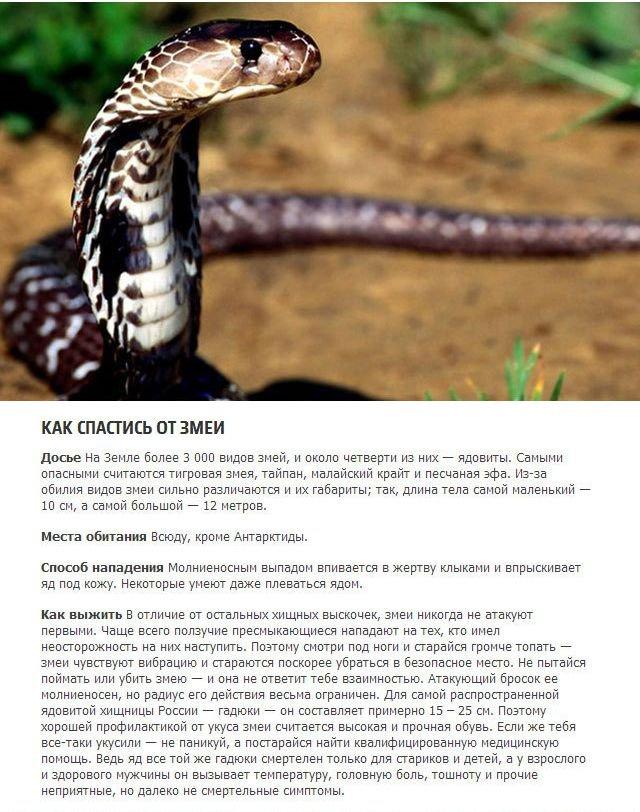 Как выжить при встречи с хищниками (5 фото)