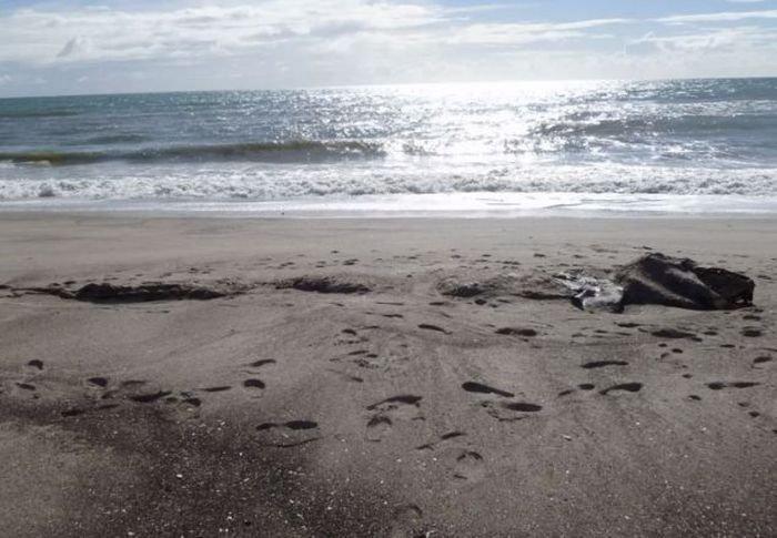Находка на пляже в Новой Зеландии (6 фото)